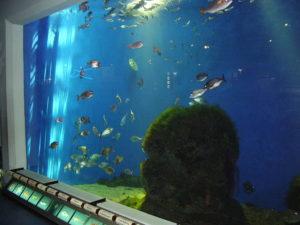 acuario Coruña